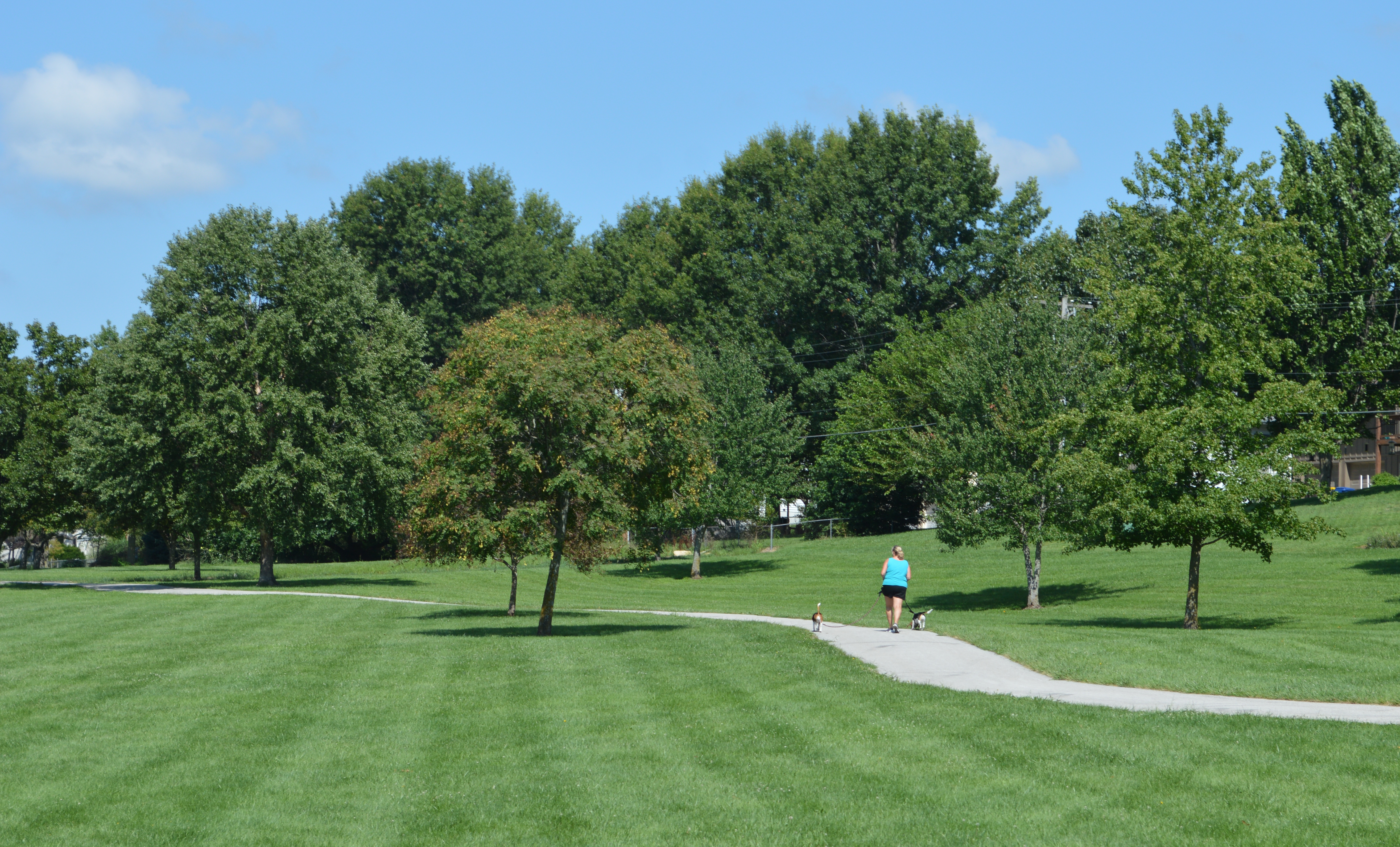 General image of walking trail in a park