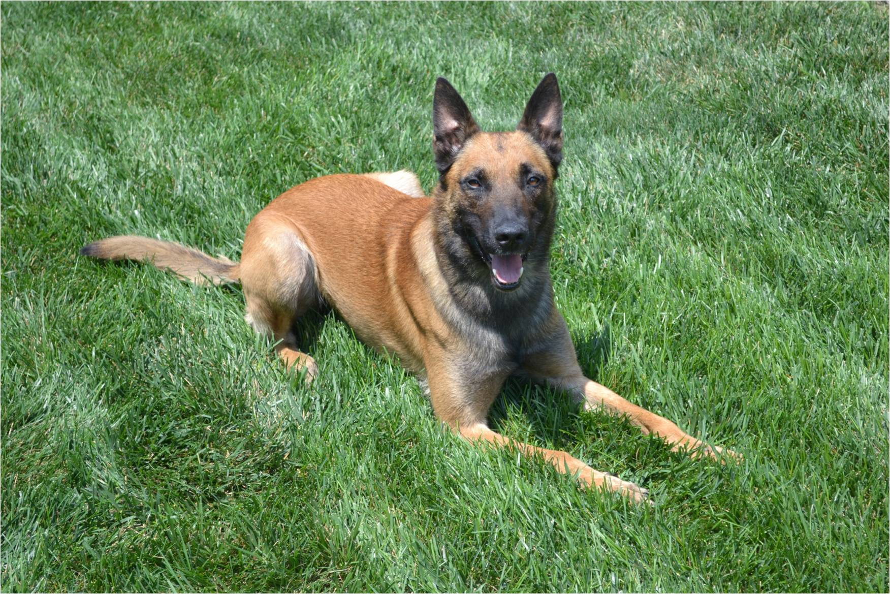 Image of K-9 Enzo.